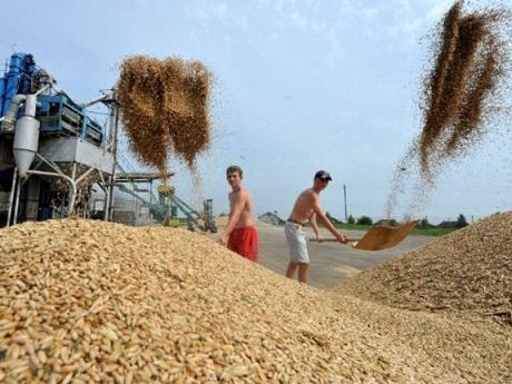 BELARUS-AGRICULTURE-WHEAT-HARVEST