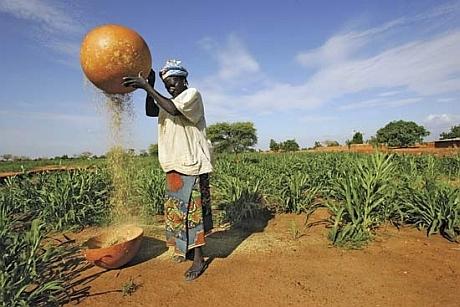 Nigeria-Farm