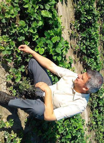 Care-i mai rentabilă, cultivarea zmeurei sau a capsunilor? Un începător și un veteran își povestesc experiența