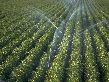 Sisteme de irigatii pentru agricultura