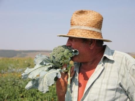 Fermerul-Chereches-gusta-din-broccoli