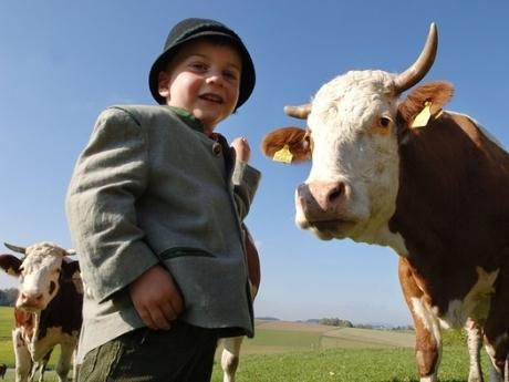 copil vaca