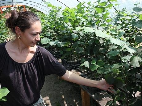 cultivarea trufelor femeie