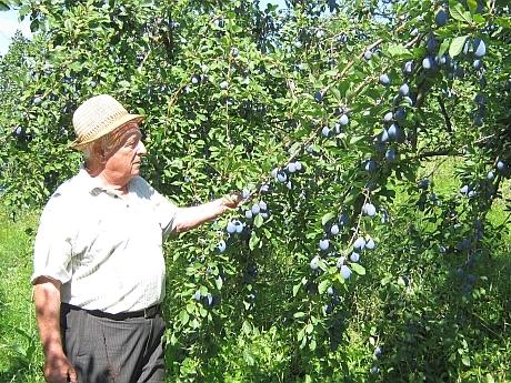 Ing. Ioan Anghel, horticultorul care are în grijă cea mai mare livadă din România