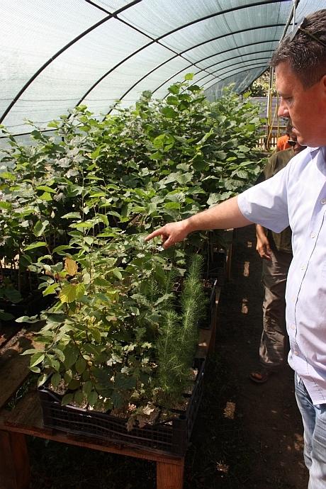 plantator cultivator de trufe