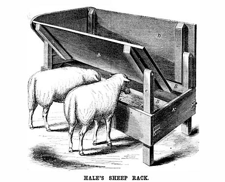 loc de hrana pentru oi