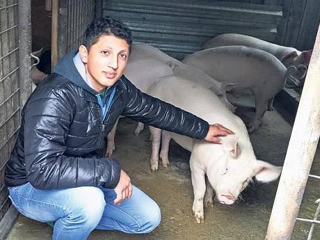 crescator de porci