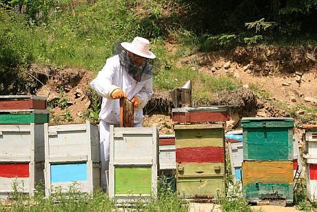 apicultor la cules