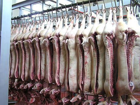 carcase de porc