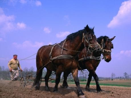 fermier ungaria