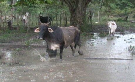 rsz_maypen-flooding0002