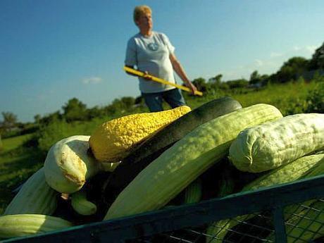 legume uriase
