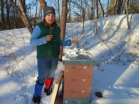 apicultor iarna