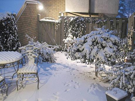 gradina iarna februarie