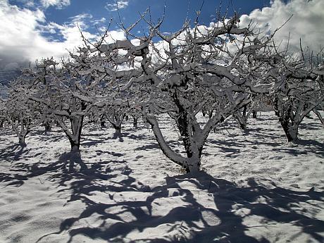 livada iarna februarie