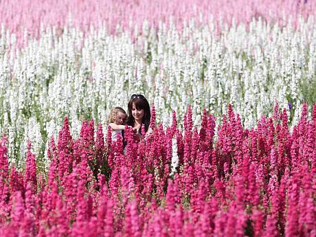 real flower petal confetti company delphinium flower fields wick worcestershire wedding harris