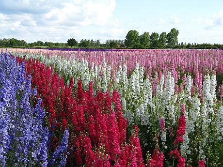 real flower petal confetti delphinium fields worcestershire