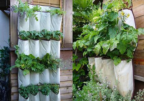 plante aromatic eprinse pe gard