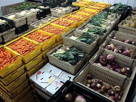 oipa legume fructe