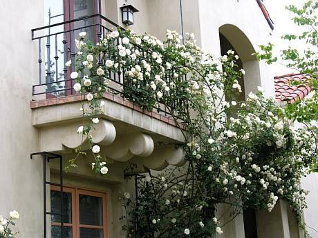 casa cu trandafiri