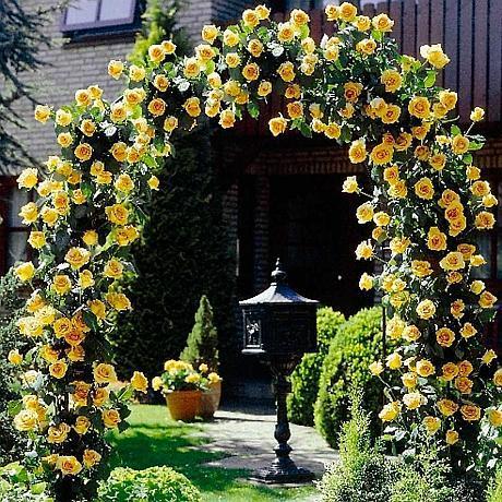 cupola de trandafiri