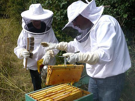 recoltarea mierii de albine