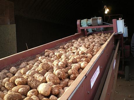 linie de sortare cartofi
