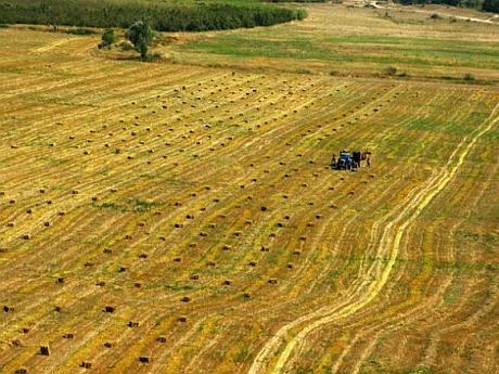 Teren Agricol Subventii Cat  Culturi