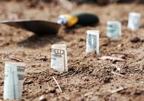 cele mai profitabile culturi agricole in 2015