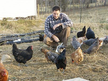 cât de profitabil este să câștigi bani pe găini)