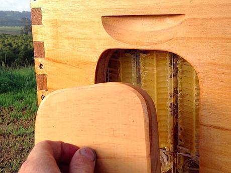 honey-on-tap-flow-hive-stuart-cedar-anderson-3