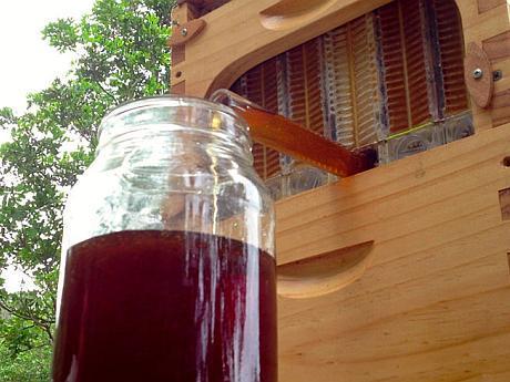 honey-on-tap-flow-hive-stuart-cedar-anderson-5