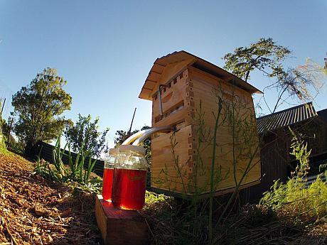 stupul cu robinet pentru miere