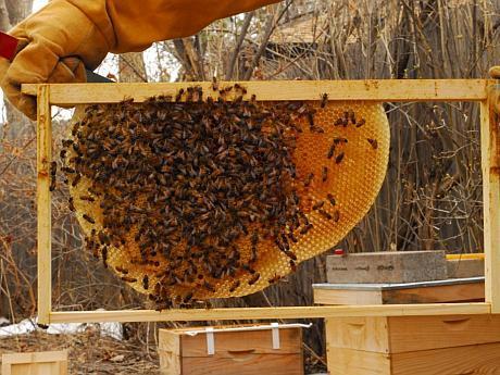 cresterea albinelor fonduri