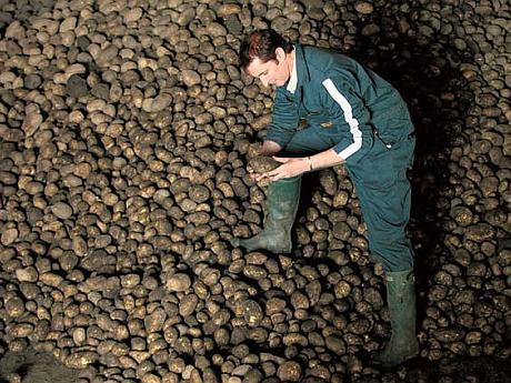 cum se cultiva cartofii in Romania
