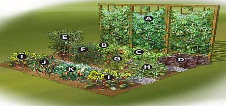 planul unei gradini de legume
