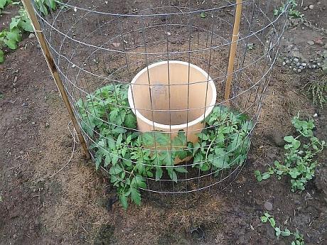 sistem cultivare a tomatelor