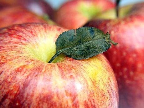 termen de valabilitate la mere