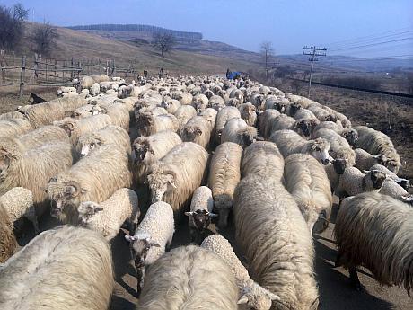 turma de oi subventie 2015
