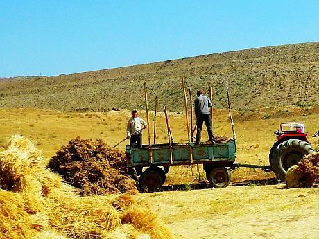 agricultura Iran