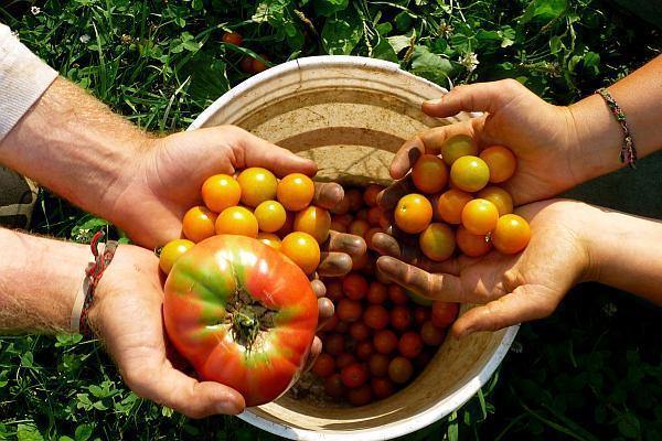 ajutor de minimis ferma ecologica