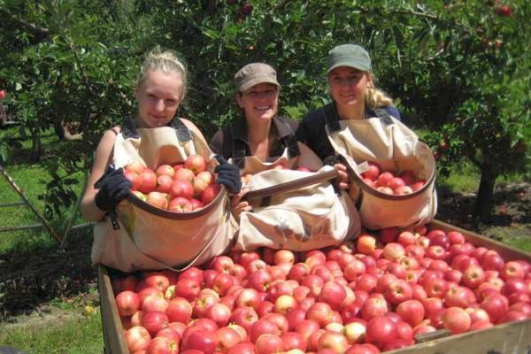 cules de mere