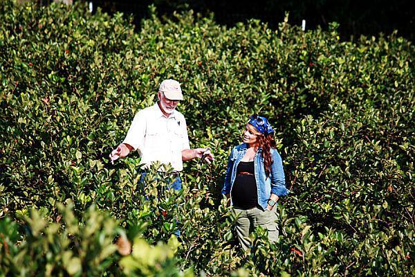 plantatie de aronia berry