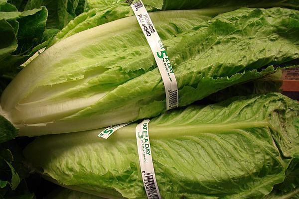 salata Romaine