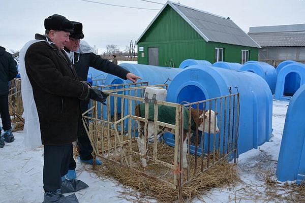 vizita ferma de vaci