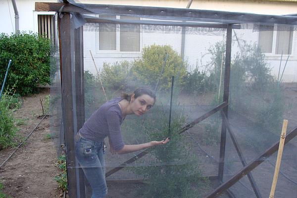Ioana Mencinicopschi plantatie de goji in Romania