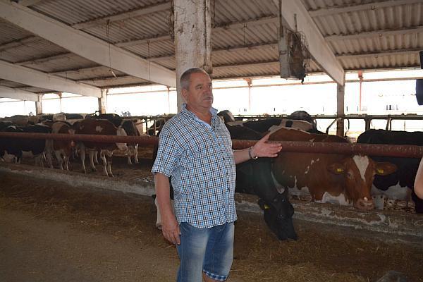 Mihai Tatu ferma de vaci