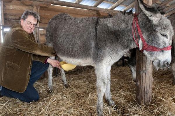 magarita la muls