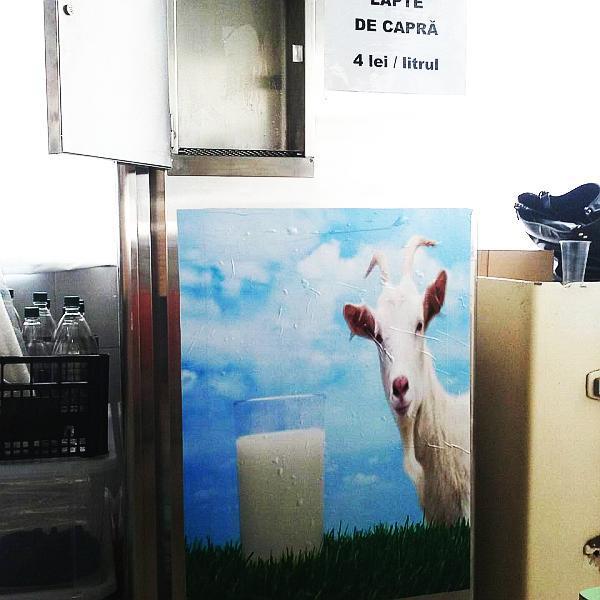 dozator lapte pret