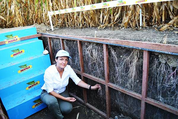 fertilizare la porumb pentru seceta
